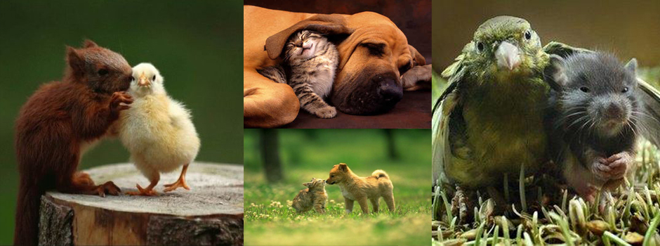 Pet Header, Pets at One Community, One Community Pets
