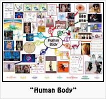"""""""Human Body"""" Lesson Plan: Teaching all subjects in the context of the Human Body"""