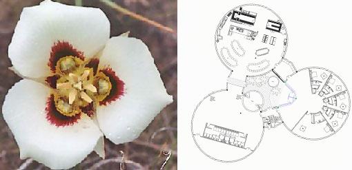 sego lily, SEGO Center, SEGO Center inspiration, rebirth