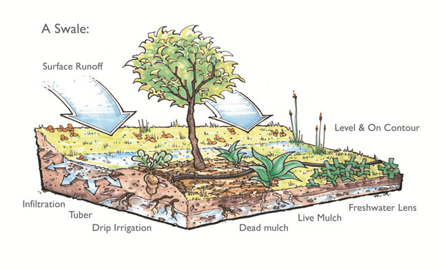 swale creation, how a swale works, how a swail works, building swales, regenerating the land, rebuilding the land, highest good food, open source food, creating sustainable food