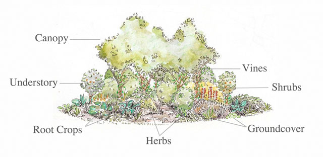 food forest, growing food, great food, natural food, open source food, One Community food, Canopy, Understory, Vines, Shrubs, Herbs, Groundcover, Root Crops, Edge Plantings, organic food, delicious food, botanical garden, grow your own food