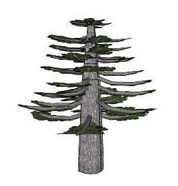 Sketchup, Araucaria/monkey puzzle tree, Pinus/pine, Sequoiadendron/giant sequoia,
