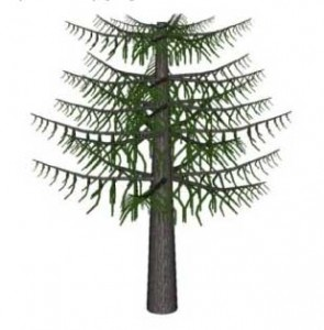 Sketchup, Sequoia/redwood, Sequoiadendron/giant redwood, Keteleeria/NCN, Taxus/yew, Abies/fir, Sciadopitys/NCN, Torreya/California nutmeg, Pinus/pine, Araucaria/monkey puzzle tree, Austrocedrus/NCN, Podocarpus/NCN, Prumnopitys/NCN