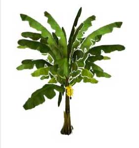 Image Result For Tropical Fern Coloring