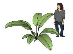 Sketchup, Renealmia/NCN, Dioscoreophyllum/serendipity berry, Heliconia/NCN, Calathea/arrowroot, Maranta/NCN