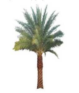 Sketchup, Phoenix/date palms