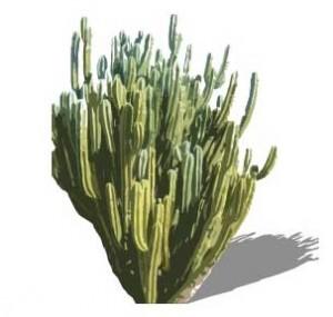Sketchup, Echinopsis/NCN, Corryocactus/sanky, Eulychnia/NCN, Armatocereus/NCN, Pilocereus/NCN, Stenocereus/NCN
