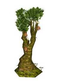 Sketchup, Cactus and succulents, Bursera/copal, Cussonia/NCN, Cyrtocapa/ciruela