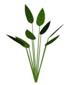Sketchup, Water and bog plants, Alisma/water plantain, Pontederia/pickerel weed, Sagittaria/arrowhead,