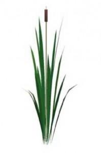 Sketchup, Water and bog plants, Typha/cattail, Acorus calamus / calamus root