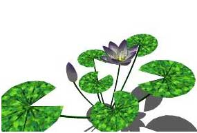 Sketchup, Water and bog plants, Nymphaea/water lily, Nuphar/spatterdock, Nymphoides/NCN