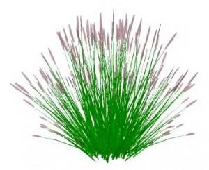Sketchup, Perennial grasses, Muhlenbergia/NCN, Panicum/panic grass, Calamagrostis/NCN, Stipa/NCN, Nassella/NCN, Schizachyrium/little bluestem