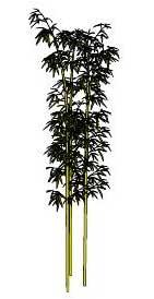 Sketchup, bamboo, Bambusa/NCN, Dendrocalamus/NCN, Phyllostachys/NCN, Guadua/NCN, Phyllostachys/NCN, Semiarundinaria/NCN, Sinobambusa/NCN, Yushania/NCN