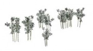 Sketchup, bamboo, Phyllostachys/NCN, Borinda/NCN, Semiarundinaria/NCN, Sinobambusa/NCN,