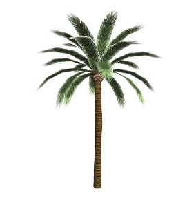 Sketchup Palm Tree