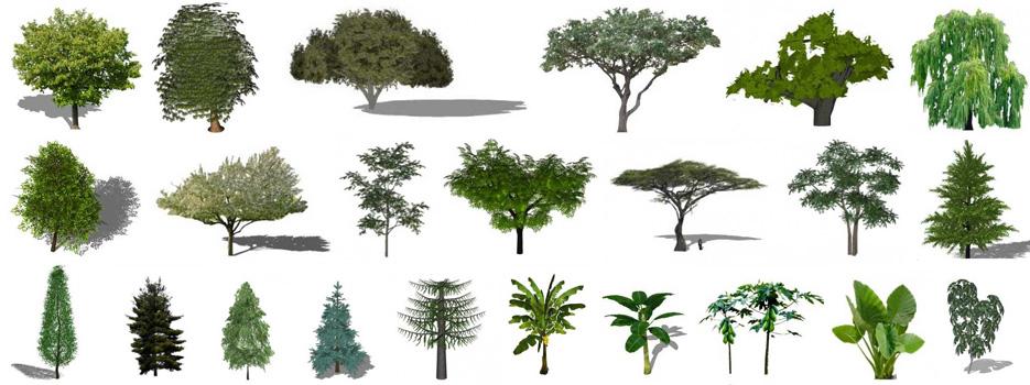Sketchup plants, sketchup trees, sketchup bushes, sketchup forest, 3-D plants, 3-D trees, 2-D Sketchup trees, 3-D Sketchup trees, 3-D sketchup plants