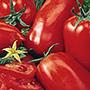 Amish Paste Tomato, One Community