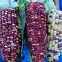 Anasazi corn, One Community