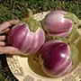 Arumugam's Eggplant, One Community
