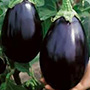 Black Beauty Eggplant, One Community