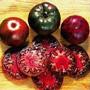 Black Krim Tomato, One Community
