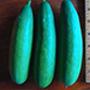 Cengelkoy cucumber, One Community