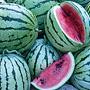 Chris Cross Watermelon, One Community