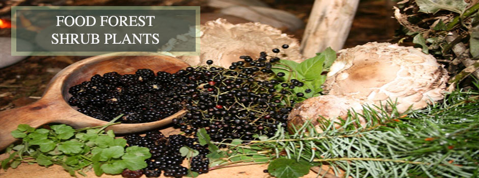 Food forest shrub plants, One Community