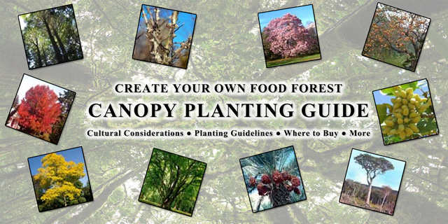 Food Forest Canopy Planting Guide, One Community