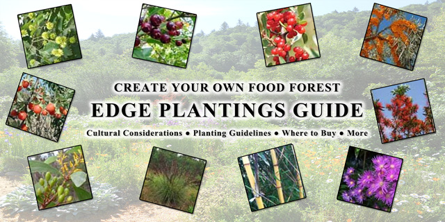 Food Forest Edge Planting Guide, One Community