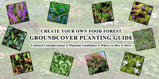 Food Forest Groundcover Planting Guide, One Community