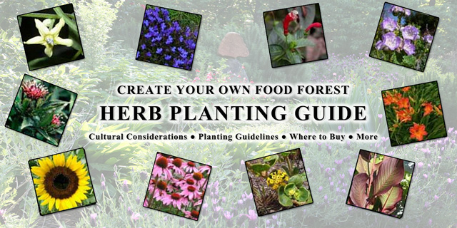 Food Forest Herb Planting Guide, One Community
