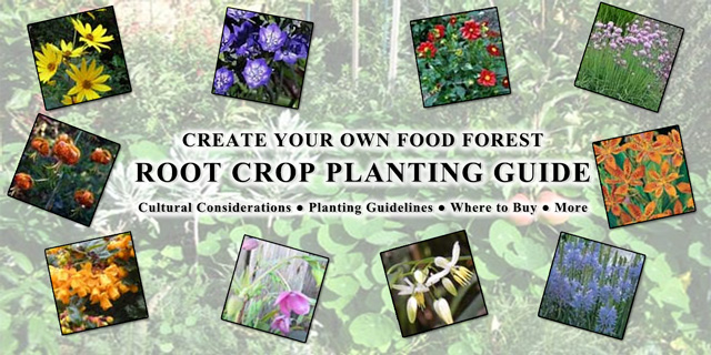 Food Forest Root Crop Planting Guide, One Community