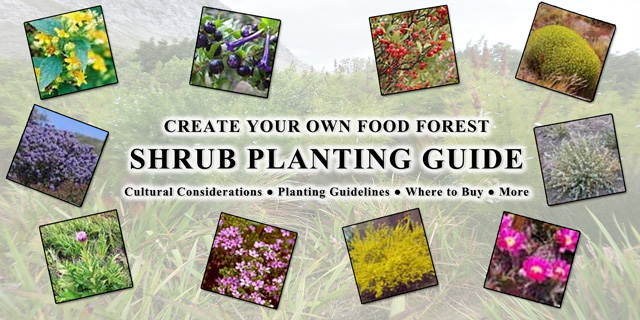 Food Forest Shrub Planting Guide, One Community