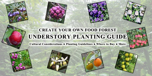 Food Forest Understory Planting Guide, One Community