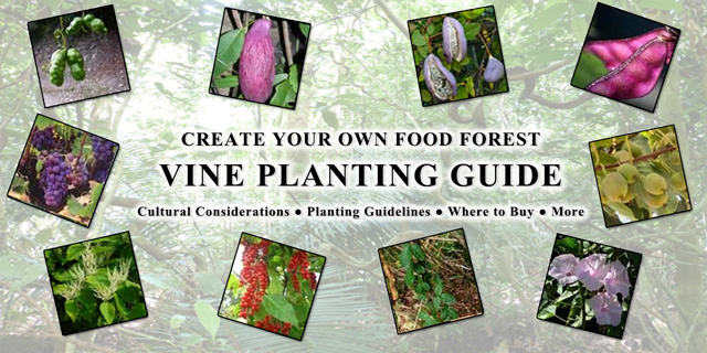 Food Forest Vine Planting Guide, One Community