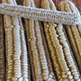 Hickory Cane corn, One Community