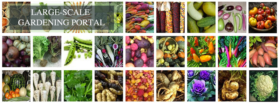 large-scale gardening, food collage, open source food