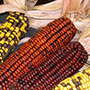 Mesquakie Indian corn, One Community