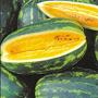 Mountain Sweet Yellow watermelon, One Community