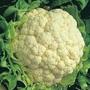 Movir Cauliflower, One Community
