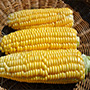 New Mama Super Sweet Corn, One Community