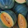 Petit Gris de Rennes Melon, One Community