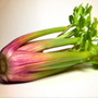 Red Celery, One Community