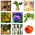 Large-scale Gardening Icon, food diversity, organic food, eco-living, grow your own food