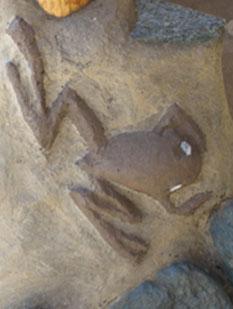 Natural-Paint-Frog2