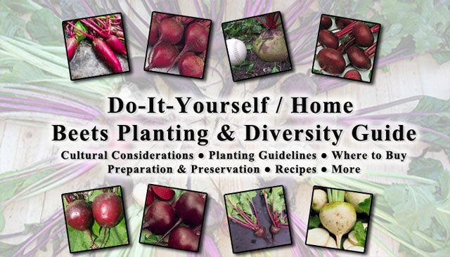 Beets: Cultural Considerations | Planting Guidelines | Where to Buy |  Recipes | More