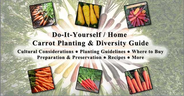 Carrots, 640, One Community