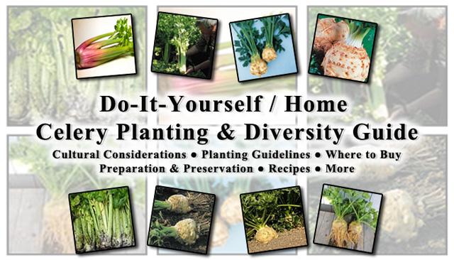 Celery, One Community