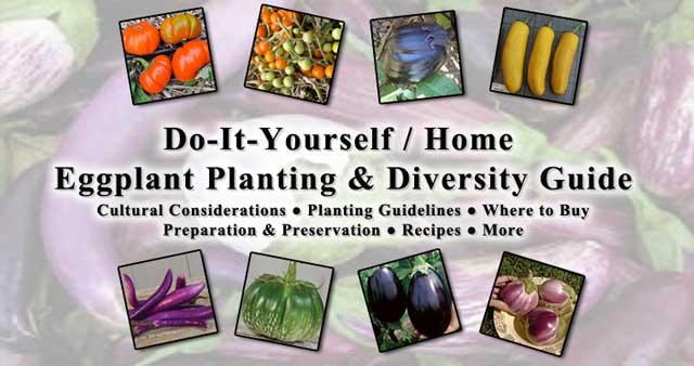 Eggplant 640, One Community
